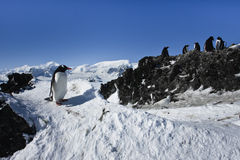 Group of penguins. On the rocks have a good time royalty free stock photos