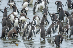 Group of penguins on shore Stock Photos