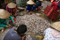 Group of people do fish preparation stock photos