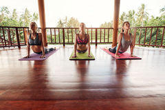 Group of people doing yoga Royalty Free Stock Photo