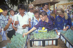 A group of people examining tree seedlings at a booth at the 1991 Los Angeles County Fair Stock Photos