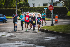 Group of People Following the Rabbit Leader during the Marathon Royalty Free Stock Photo