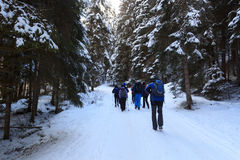 Group of people hiking on wintery snowy path with trees in Stubai Alps mountains Stock Photos