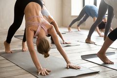Group of people practicing yoga lesson, Downward facing dog pose. Group of young sporty people practicing yoga lesson, doing Downward facing dog pose, adho mukha stock images