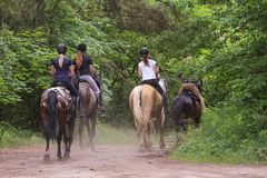 A group of people riding horses in the forest royalty free stock photo