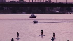 A group of people surfing with stand up paddle boards at beautiful sunset motorboat stock video