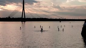 A group of people surfing with stand up paddle boards at beautiful sunset stock video