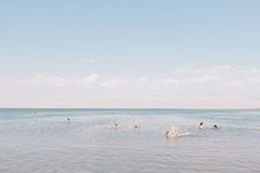 Group of People Swimming in the Sea Royalty Free Stock Photos