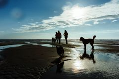 Group of people with their dogs at the beach stock photos