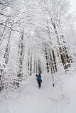 Group of people walking in a forest  with snow rackets Royalty Free Stock Image