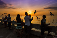 Group of people watching the sunset and seagull at seaside. Bangkok,Thailand, August,25,2015, group of people watching the sunset and seagull at seaside royalty free stock image