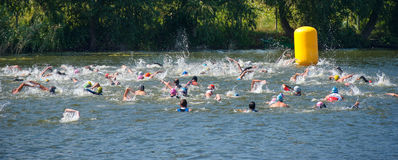 Group people in wetsuit swimming at triathlon royalty free stock images