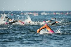 Group people in wetsuit swimming. At triathlon royalty free stock photos