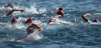 Group people in wetsuit swimming. At triathlon royalty free stock images