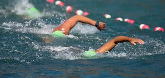 Group people in wetsuit swimming. At triathlon royalty free stock photo