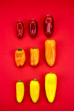 Group of peppers. Group of red, orange and yellow peppers on red background Stock Images