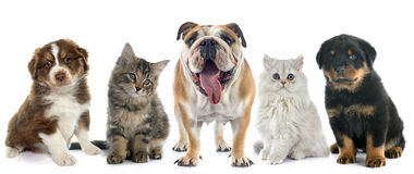 Group of pet. In front of white background Stock Images