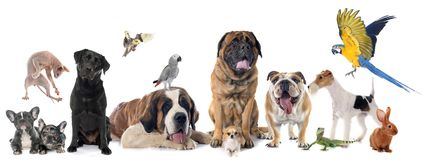 Group of pet Royalty Free Stock Photo