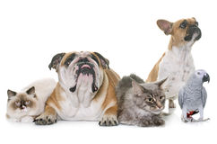 Group of pet Stock Photography