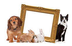 Group of pets. Standing around a golden picture frame in front of a white background Stock Photography