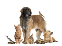 Group of pets. Against white background Stock Image