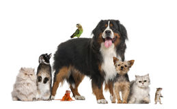 Group of pets. Against white background Stock Images