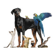 Group of pets. Against white background