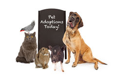 Group of Pets Around Adoption Event Sign. A group of common household pets around a black chalkboard A-frame sign indicating that there are pet adoptions today royalty free stock photography