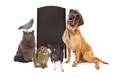 Group of Pets Around Blank Chalk Board. A group of common household pets around a blank black chalkboard A-frame sign. Add your own message with chalk font Royalty Free Stock Image