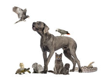 Group of pets - Dog, cat, bird, reptile, rabbit. Isolated on white Stock Photo
