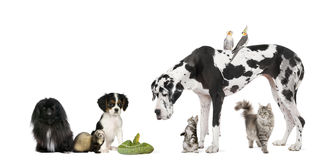 Group of pets in front of white background Royalty Free Stock Image