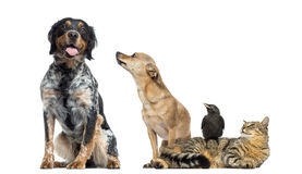 Group of pets, isolated royalty free stock photos