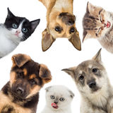 Group of pets looking. On a white background Stock Images