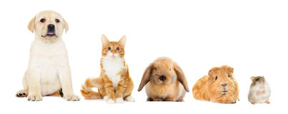 Group of pets. Looking on a white background Royalty Free Stock Image