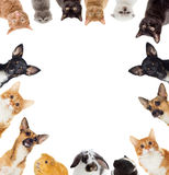 Group of pets peeking Royalty Free Stock Photography
