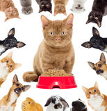 Group of pets peeking Stock Photography
