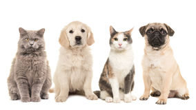 Group of pets, puppy dogs and adult cats