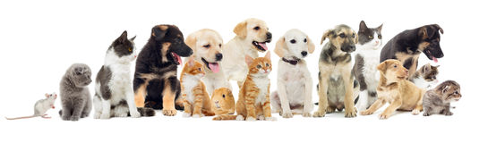 Group of pets. Set of pets looking sideways Royalty Free Stock Image