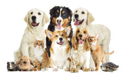 Group of pets Royalty Free Stock Images