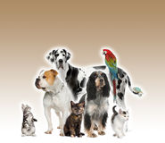 Group of pets standing agaisnt brown background Royalty Free Stock Photo