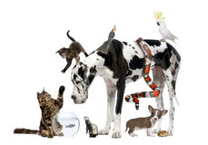 Group of pets together royalty free stock images