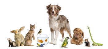 Group of pets together Stock Photo