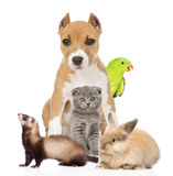 Group of pets together in front. Isolated on white background.  Royalty Free Stock Photos