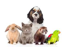Group of pets together in front view. Isolated on white background.  royalty free stock photos