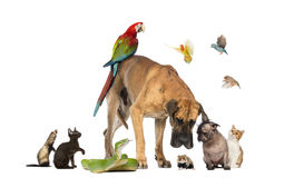 Group of pets together stock photos
