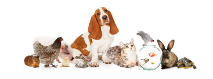 Group of Pets Together Over White Royalty Free Stock Photos
