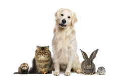 Group of pets. On white Stock Photos