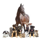 Group of pets. On a white background Royalty Free Stock Images