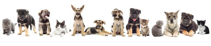 Group of pets royalty free stock photo