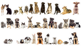 Group of pets. On white background Stock Photography